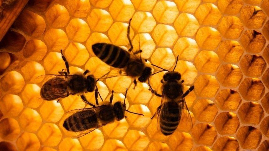 Что можно и категорически нельзя делать 17 января в день Зосима-пчельника