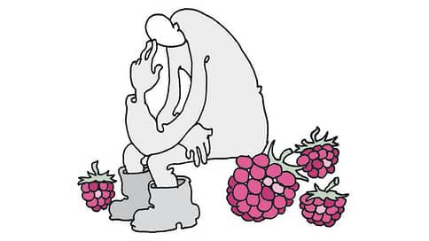 По зрелом рассаждении // Минсельхоз хочет увеличить поддержку ягодной отрасли