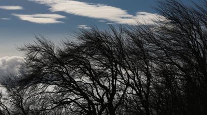 Синоптики предупредили об усилении ветра до 18 м/с на Ставрополье