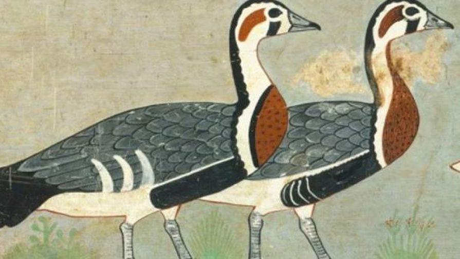 На древнеегипетском рисунке нашли изображение вымершего гуся