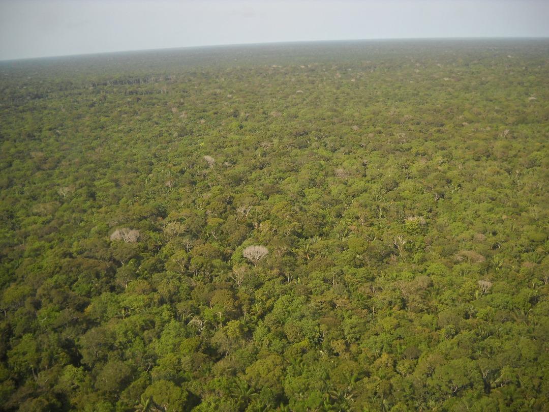 На Facebook начали продавать леса Амазонии вместе с индейцами